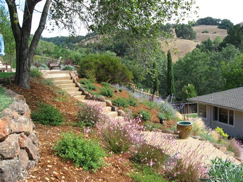 California Native Plants California Landscaping