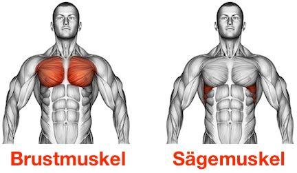 brustmuskeln zuhause trainieren ᐅ effektive brust 252 bungen mit kurzhanteln top 5 bilder