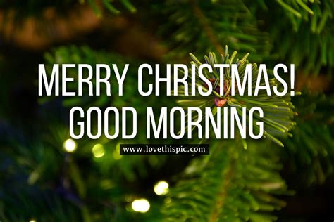 fir tree merry christmas good morning pictures   images  facebook tumblr