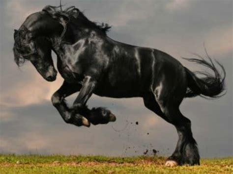 caballo cogida brutal por detras mustang motivo por el que tiene un caballo en la parrilla