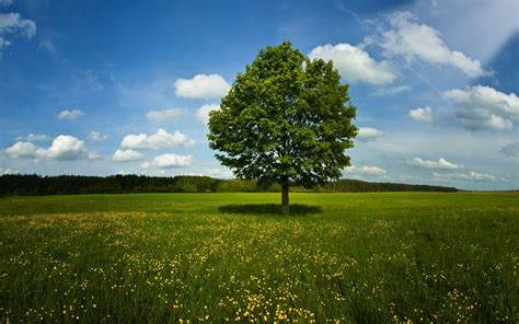 tree background hd photos big tree in farm photo hd wallpapers
