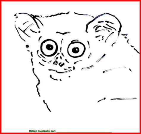 imagenes de animales mamiferos para colorear dibujo de mam 237 feros para colorear e imprimir