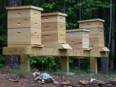 Raising Honey Bees In Your Backyard by How To Raise Honey Bees Survival