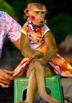 monkey wearing makeup animals wearing makeup pinterest makeup  monkey