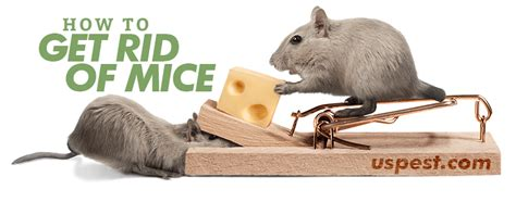 the best way to get rid of mice they re like
