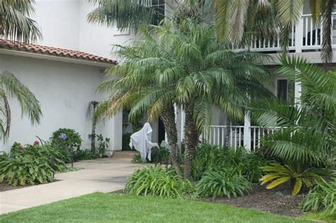 Doubletree Palm Gardens by Best 25 Palm Trees Landscaping Ideas On