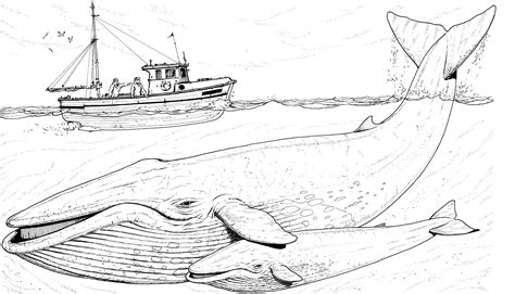 Free Whale Coloring Pages Humpback Whale Coloring Page