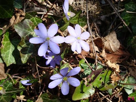 nomi fiori di montagna frammenti di natura vita colori luce fiori di