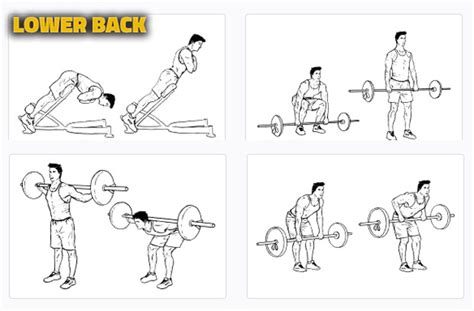 lower back workouts most popular workout programs