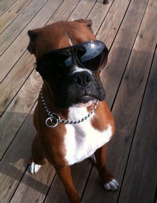 badass dogs 50 hilarious athlete twitpics