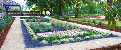 yard    rain garden sustainability