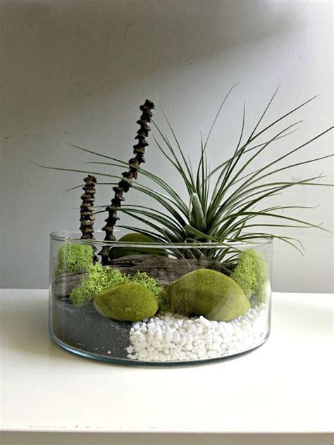large air plant terrarium glass vase living decor diy