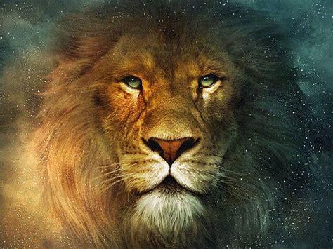 wallpaper full hd lion lions wallpapers full hd wallpapers top desktop hd