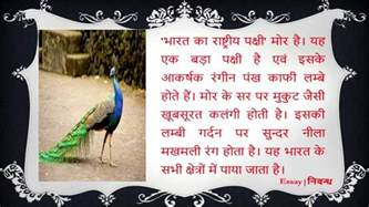 National Bird Of India Essay by Essay On National Bird Of India भ रत क