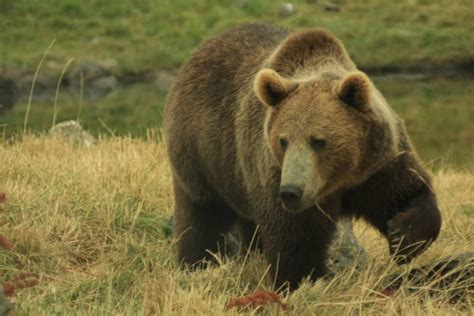 imagenes de animales que hibernan 15 ejemplos de animales que hibernan