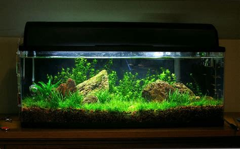 pin by walton on aquatic habitat