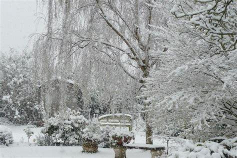 wendys winter garden snowy garden vista winter garden