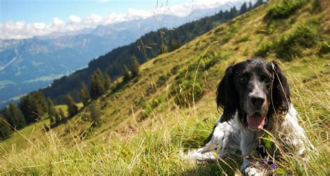 are dogs allowed in national parks 10 national parks where your is allowed