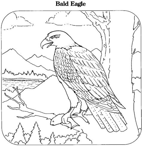 coloring book pages of bald eagles 25 best images about cub scout printables on pinterest
