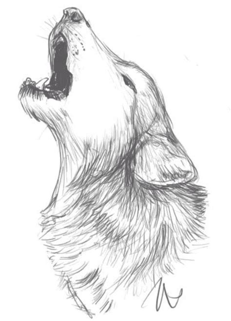 Drawing Wolf by 25 Best Ideas About Wolf Drawings On How To