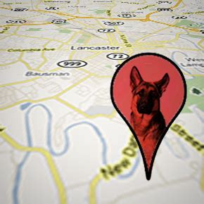 gps microchip for dogs gps pet tracking chips the last newspaper