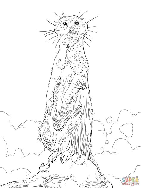 Meerkat Standing Upright Coloring Page Free Printable Meerkat Colouring Pages