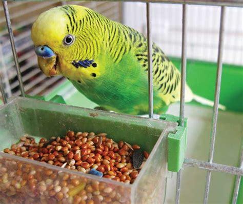 bird feeding tips bird food bird nutrition