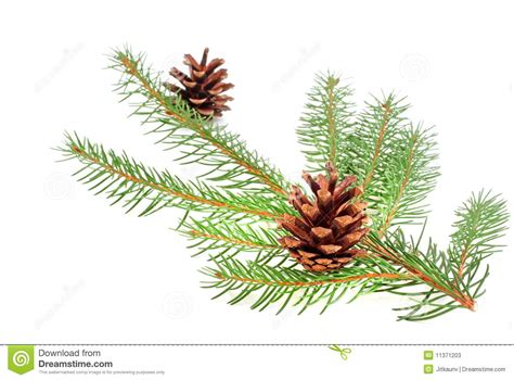 christmas tree bough with cone stock photos image 11371203