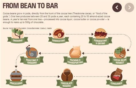 chocolate from bean to bar to s more books syngenta canada on cocoa bar and infographic