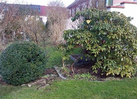 Winterpflanzen Für Den Garten by Immergr 252 Ne Pflanzen F 252 R Den Garten Im Winter Der Wohnsinn