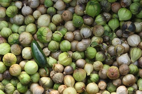 100 million years of food what our ancestors ate and why it matters today books when did tomatillos start wearing papery jackets