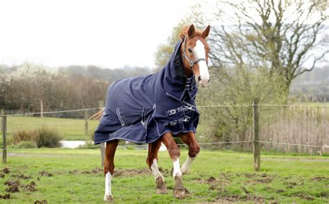 Horse Outdoor Rugs Roselawnlutheran Outdoor Rugs For Horses