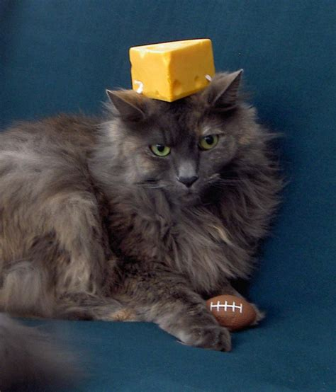 cheese cat bing images