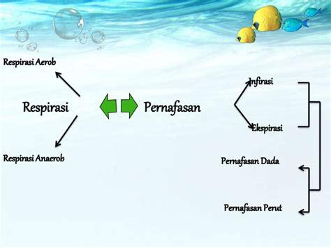 Turban Bayi Ikat Pita Polos 6 sistem pernapasan