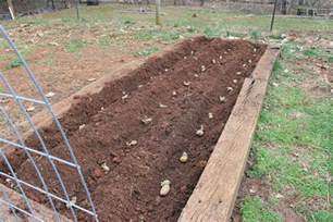 how to plant potatoes in a raised bed