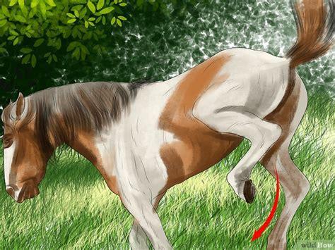 how to your to sick em como saber se o seu cavalo est 225 doente 12 passos