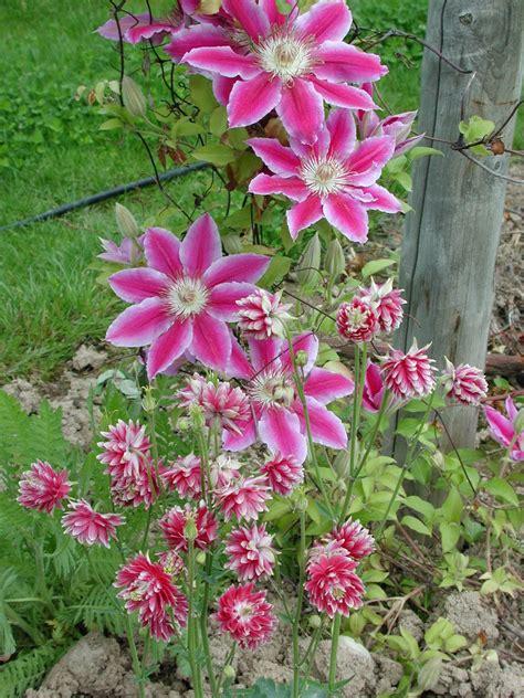 Plantes Grimpantes Pour Pergola by Focus Sur Les Plantes Grimpantes Plantation Support Et