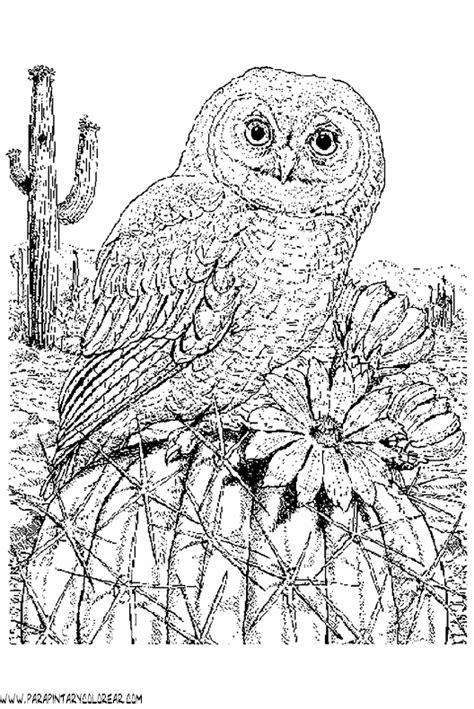 imagenes para dibujar buhos dibujos de buhos 22