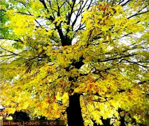 cooking varieties food and health benefits rhyming recipe on bread maple tree in