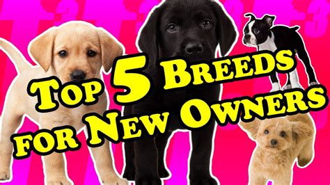 top 5 best breeds for first time dog owners best breeds for new owners youtube