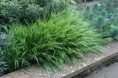 small decorative grasses 28 images small ornamental grasses for sun www imgkid com the