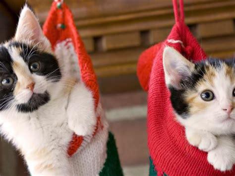 imagenes navidad gatitos fotos de gatitos de navidad imagui