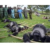 Officials Of Virunga National Park In The Democratic Republic Congo