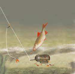 Feeder Fishing For Roach it s been a while