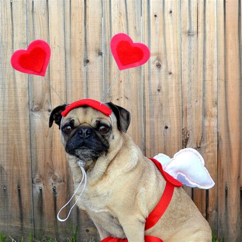 cupid s dogs is in the air veterinarians in leesburg market animal clinic