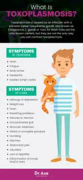 toxoplasmosis dogs toxoplasmosis symptoms 8 treatments dr axe