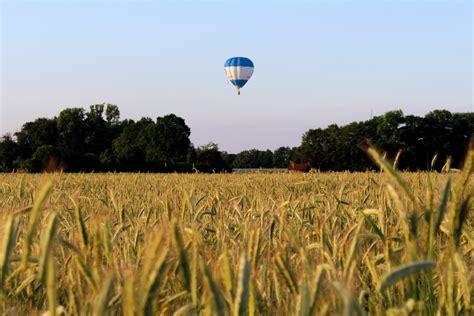 images landscape nature plant sky grain