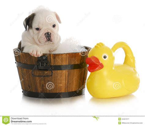 Bubbles For Bathtub Dog Bath Royalty Free Stock Photography Image 24457377