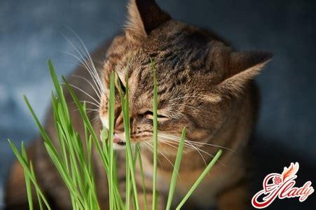alimentazione gattini come mangiare al gatto