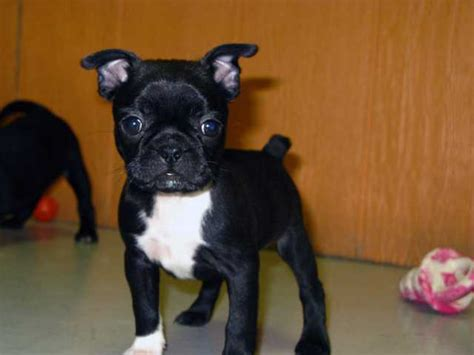 dogs and bed bugs bug dog breed